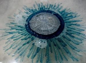 Porpita porpita jellyfish